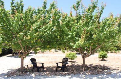 Casa vacanza con giardino ad Alghero